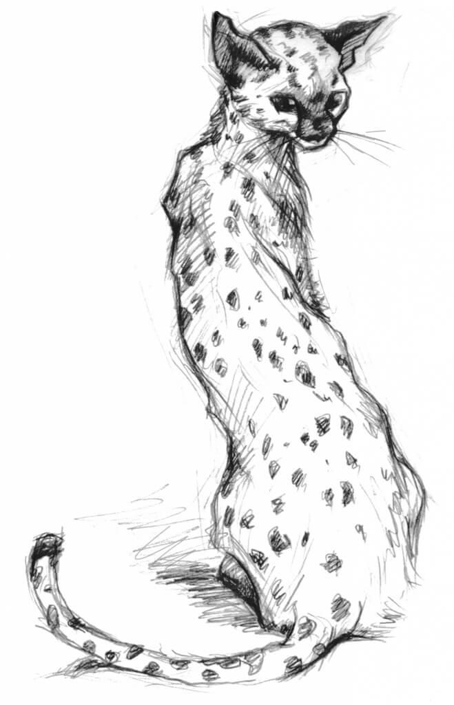 Кошка в Сумерках