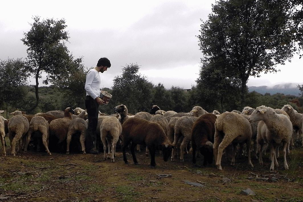 На даче есть огород, овцы, гуси и 30 куриных яиц в неделю